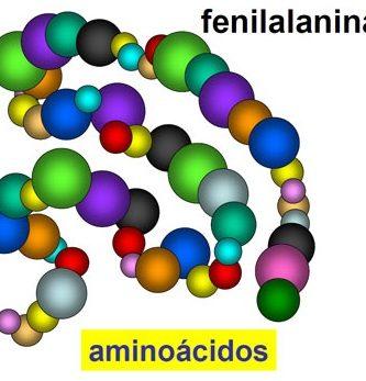 qué es la fenilalanina